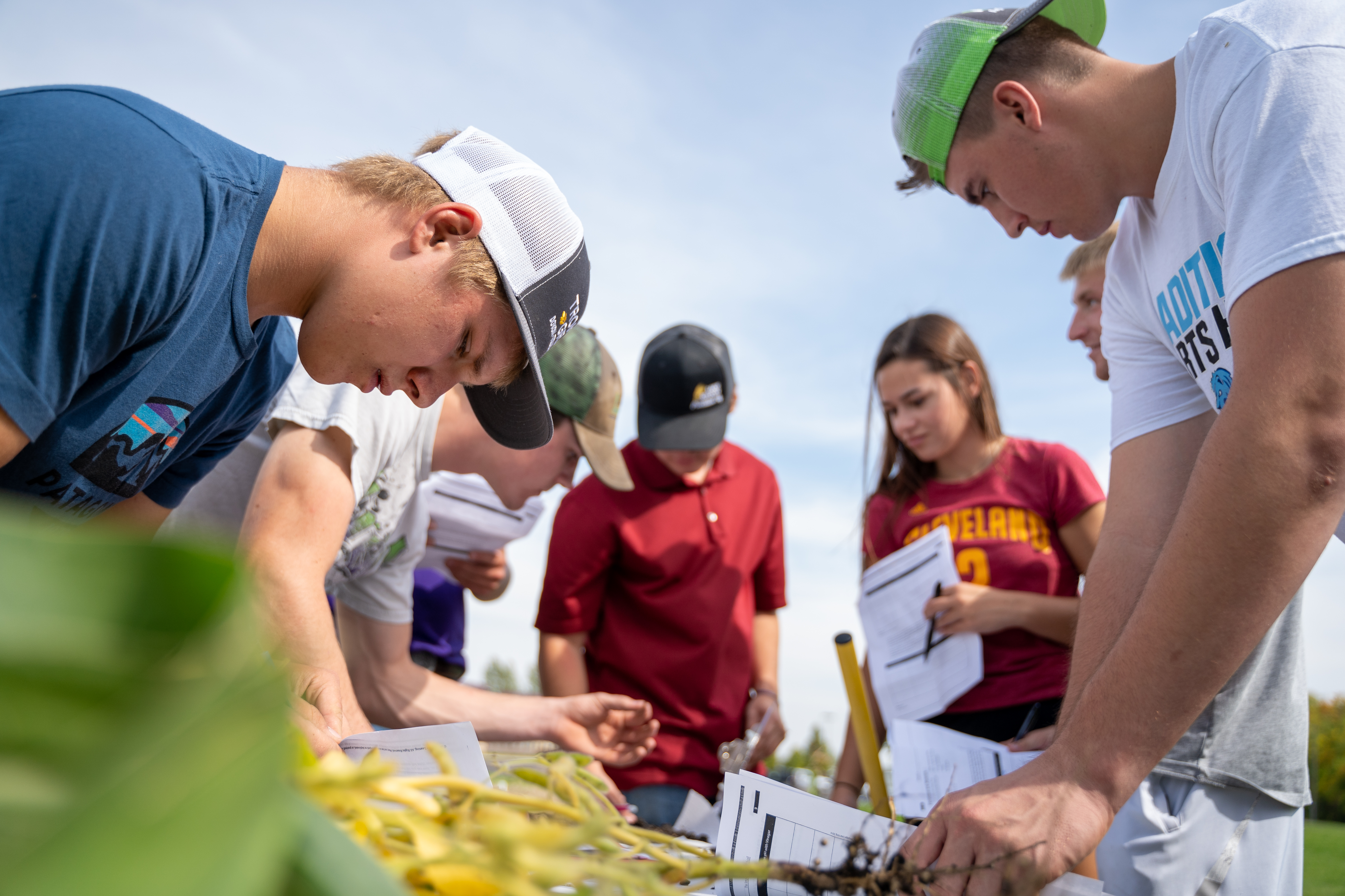 ag students working in corn field